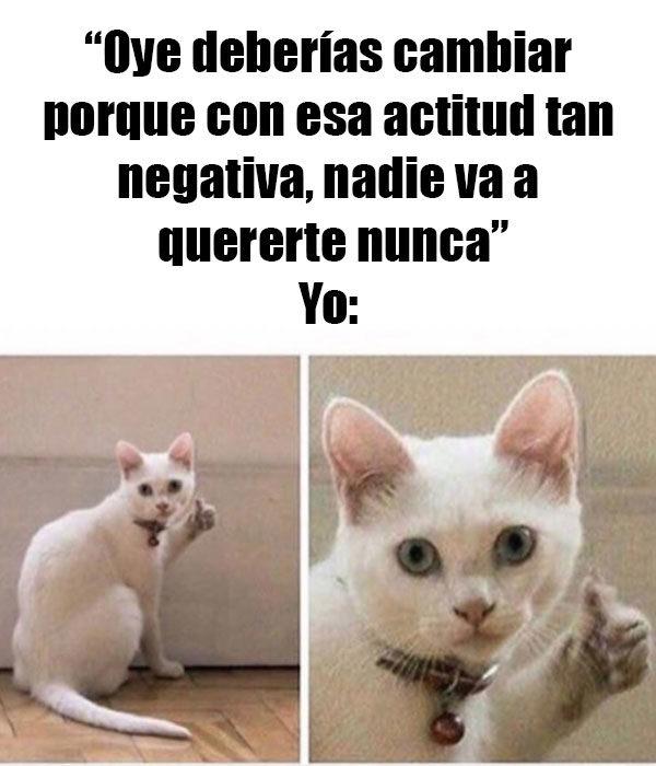 gato meme nunca te van a querer