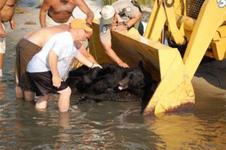 oso rescate florida mar