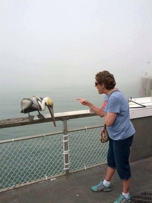anciana regañando a un pelícano