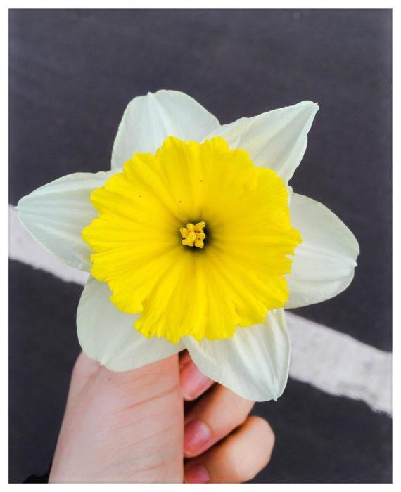 flor con pétalos amarillos y blancos