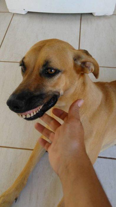 perra graciosa dientes postizos