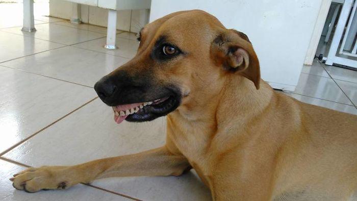 dentadura en un perro sonriendo