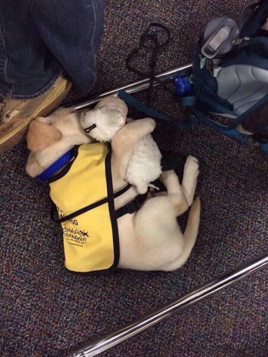 cachorro de servicio abrazando a un perro de felpa