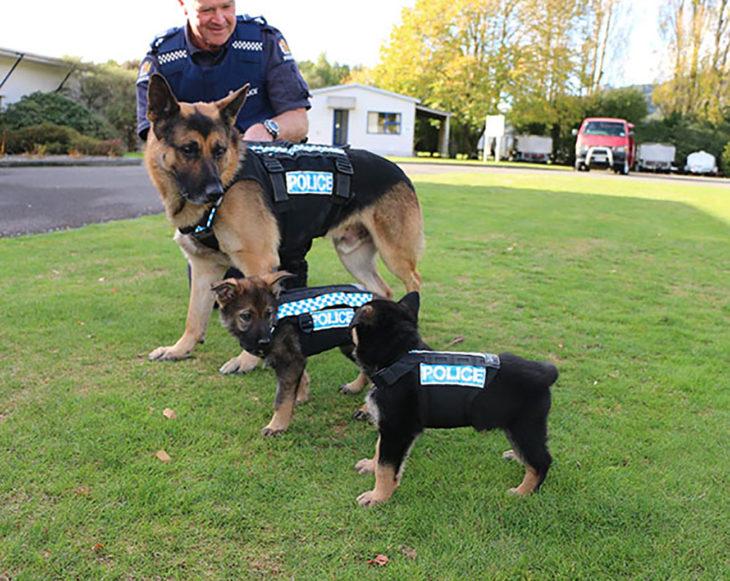 perro adulto policía y dos cachorros