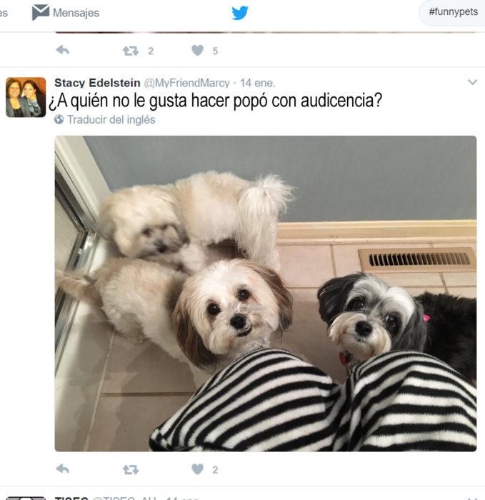 tres perritos mirando hacia arriba