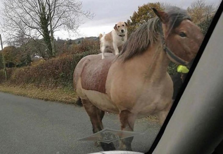 perro encima de un caballo