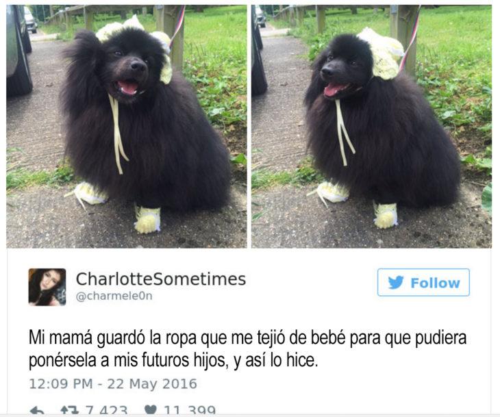 perro negro con gorro y guantes tejidos