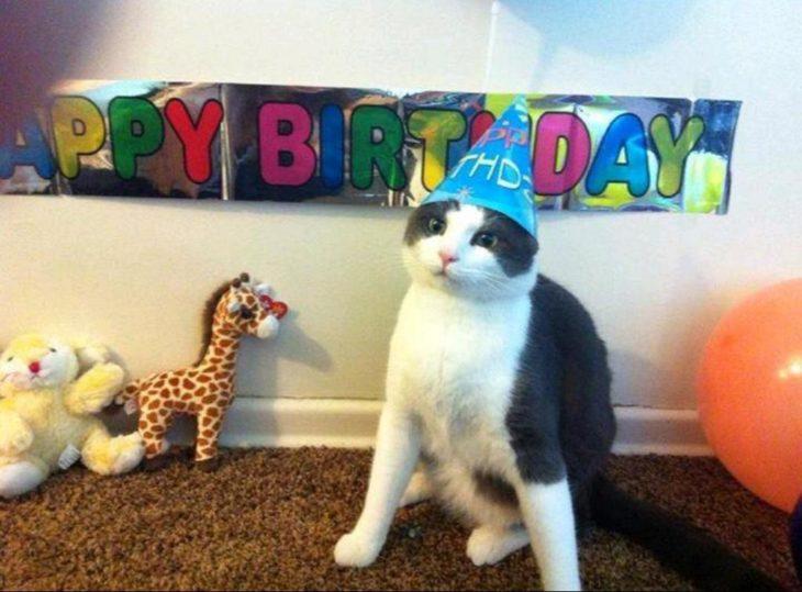 celebración cumpleaños gato