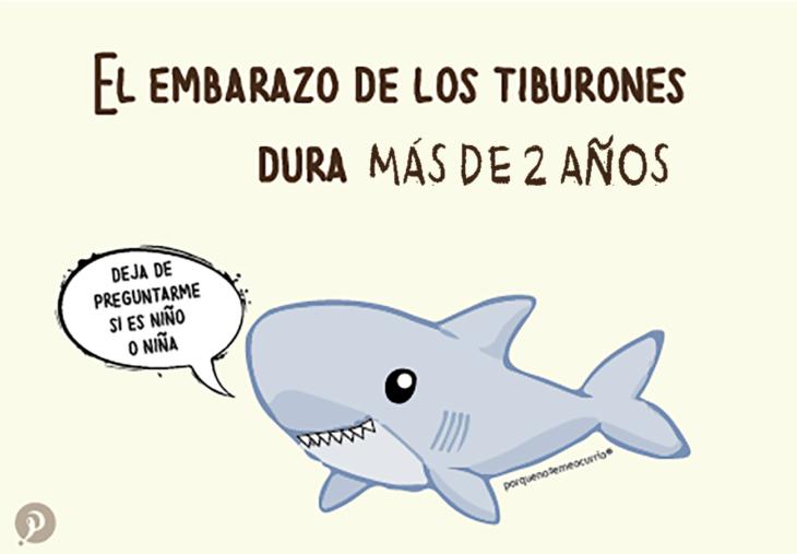 ilustración de un tiburón