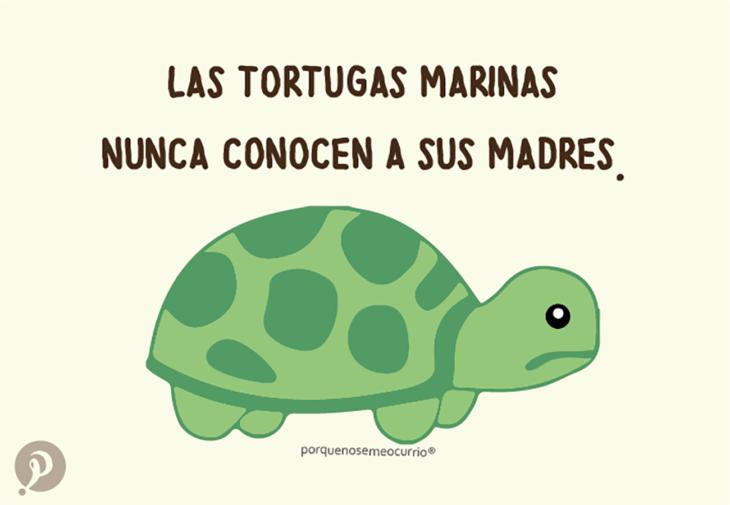 ilustración de una tortuga