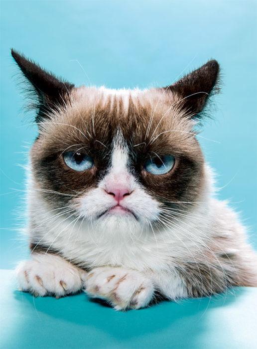 grumpy cat gato enojado molesto fondo azul