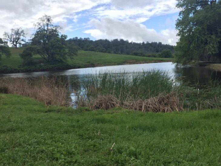 paisaje de lago y campos verdes