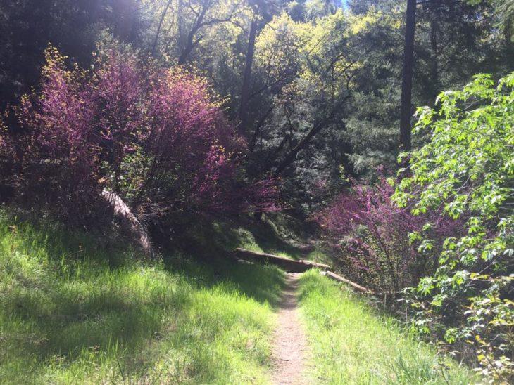 paisaje de un camino y hay flores lilas
