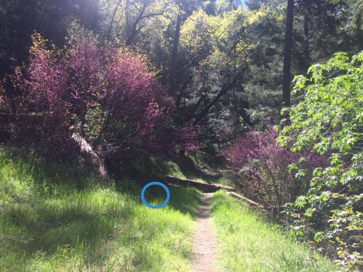 perro escondido en paisaje de camino y flores lilas