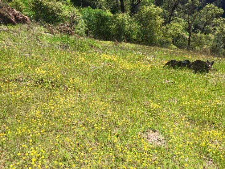 perro escondido en el campo