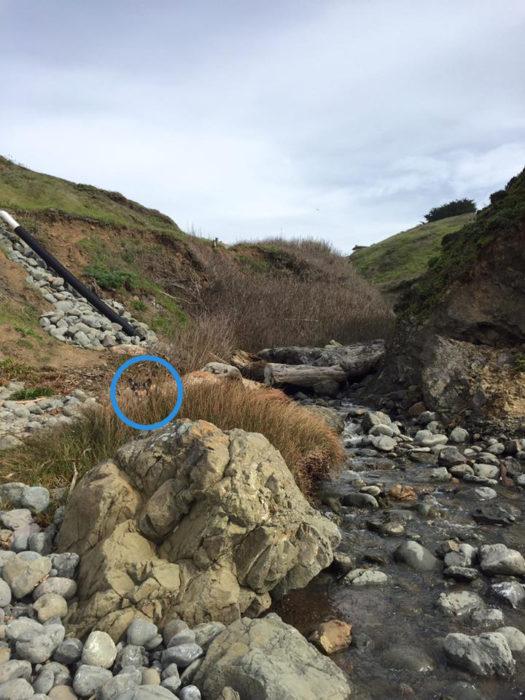 perro escondido en paisaje de río y piedras