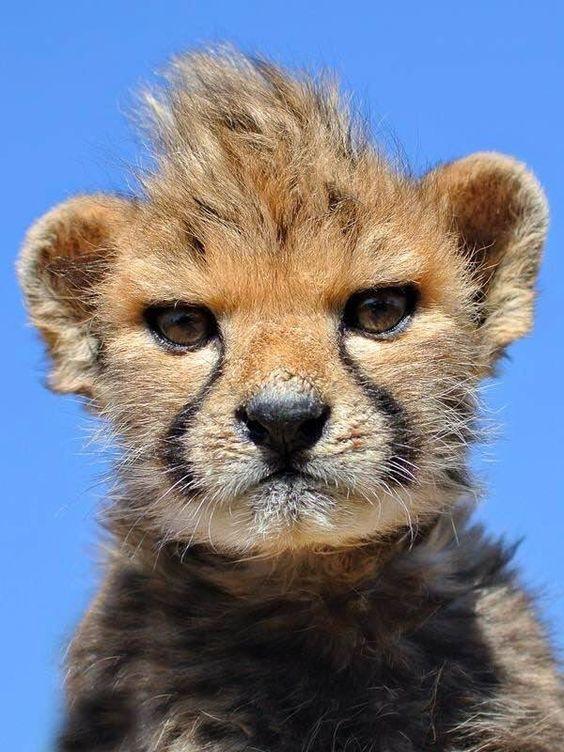 15 Animales Adorables Intentando Verse Rudos Pero Fracasando
