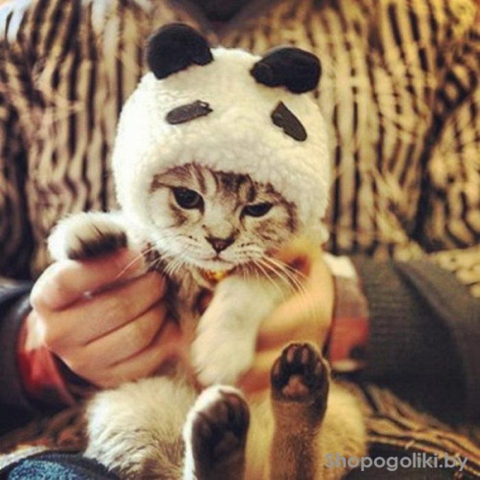 gato disfraz enojado