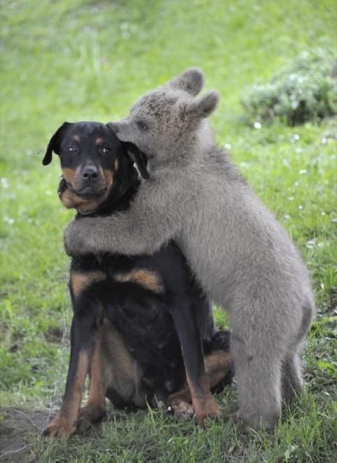 quítate de aquí oso, perro enojado