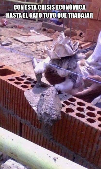 meme de gato albañil