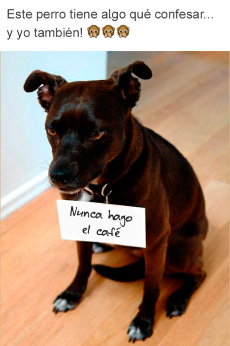confesión perro no hace café