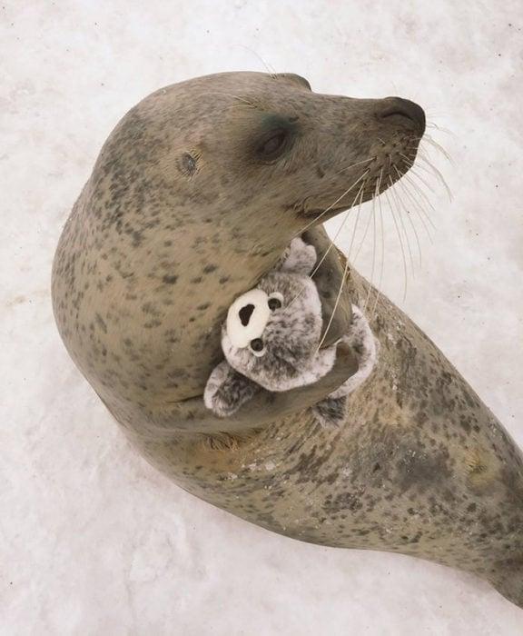 Foca con una foca de peluche