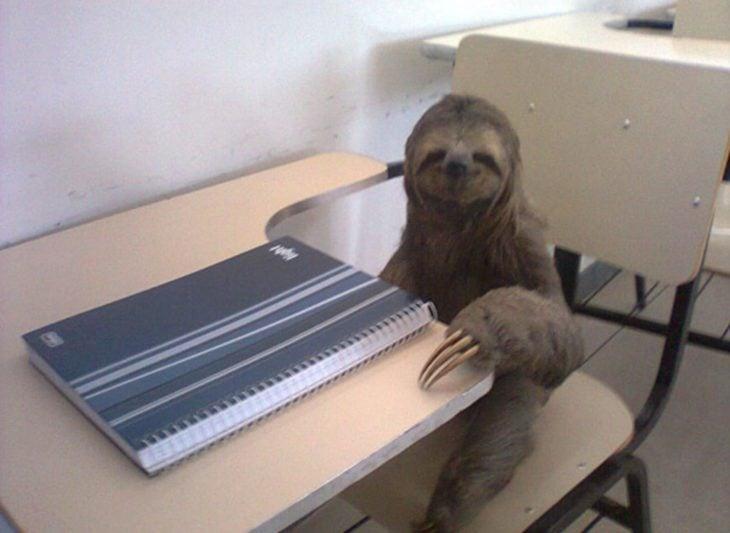 Le gusta la escuela