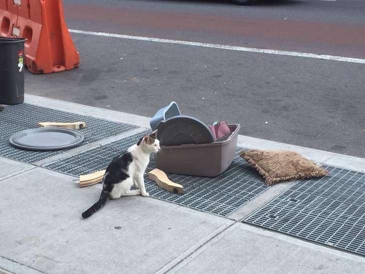 abandonan a gato en la calle