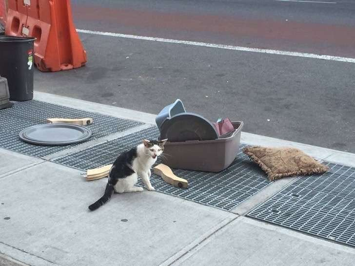 gato en la calle con sus juguetes