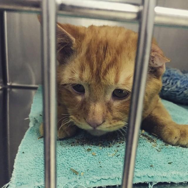 gato triste en refugio