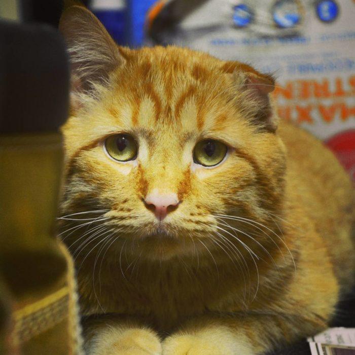 gato con la mirada triste