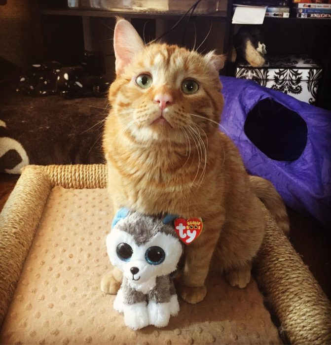 gato con su juguete ojón