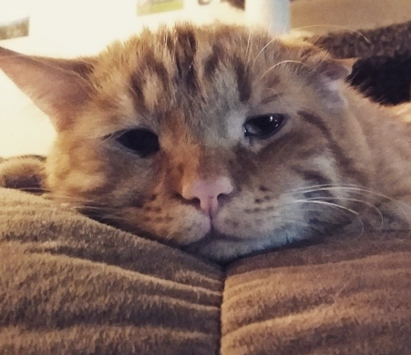 gato adormilado