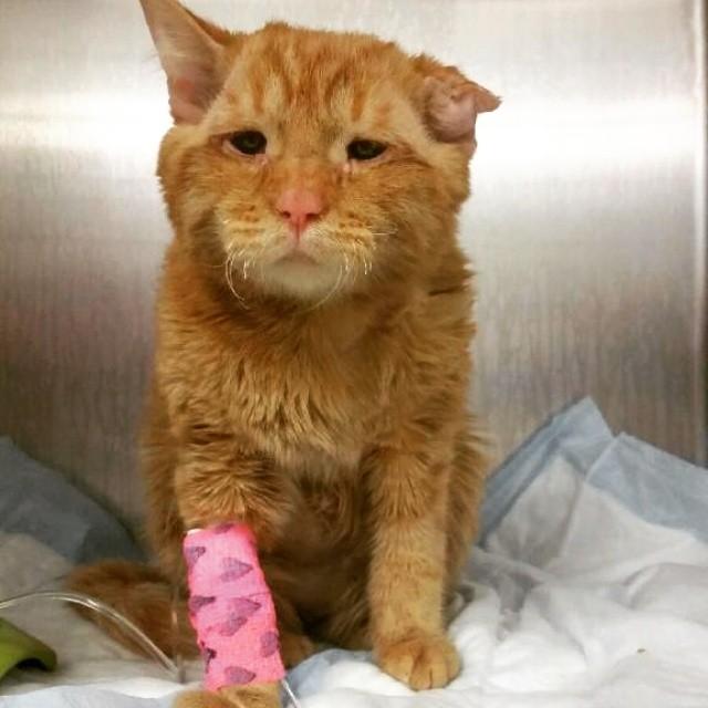 gato maltratado en refugio