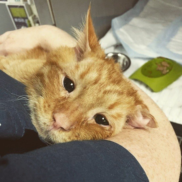 abrazo a gato en refugio