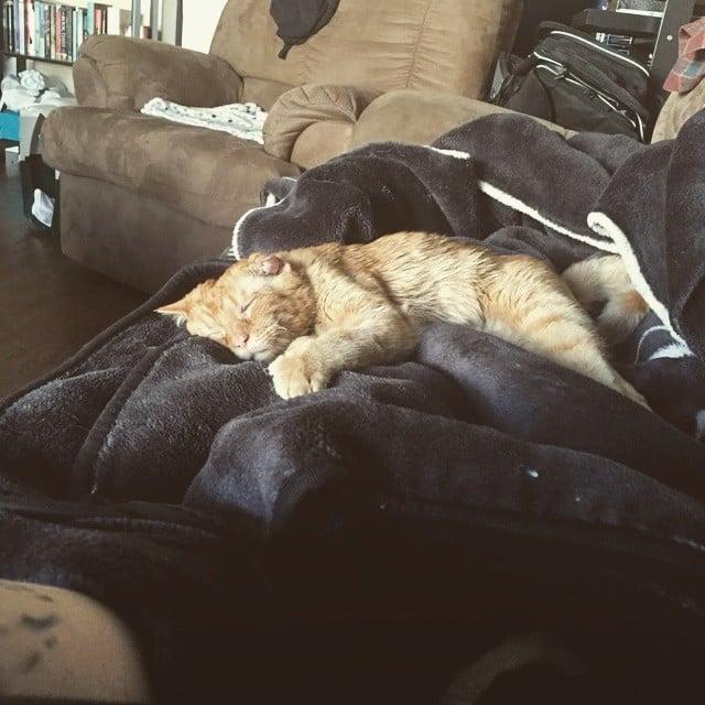 gato dormido en sillón