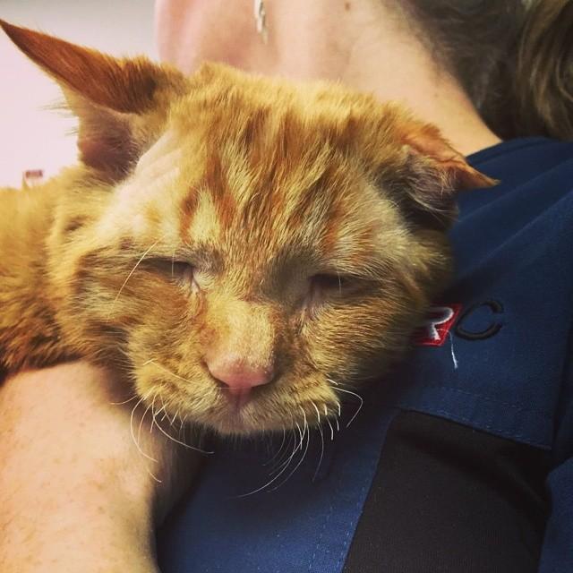 gato maltratado ni abre los ojos