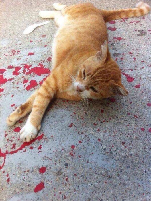 gato acostado sobre pintura roja