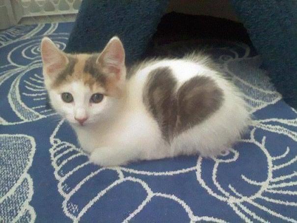 gatocon corazón en su pelo