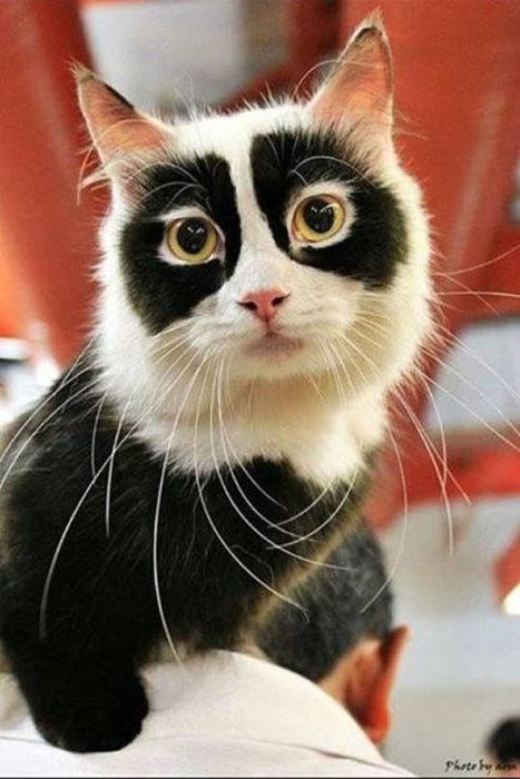 gato con antifaz negro