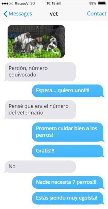 Mensajes equivocados - perritos veterinario