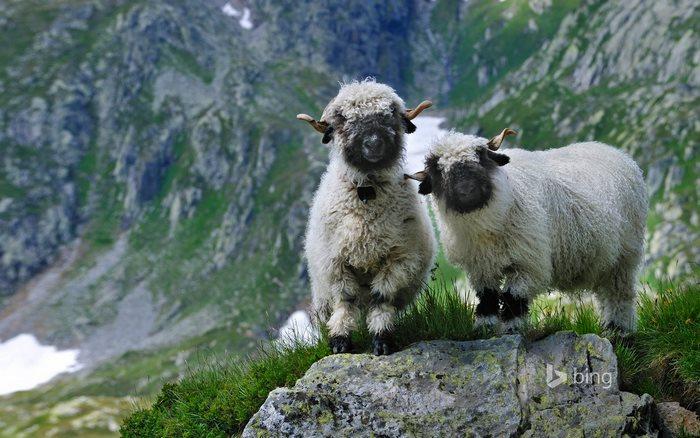 montaña dos ovejas