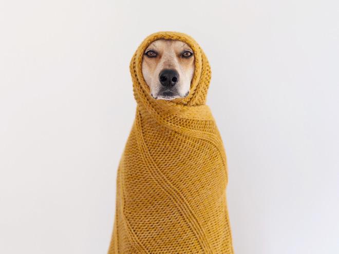 perro envuelto se ve muy elegante