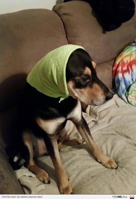perro con mascada verde en la cabeza