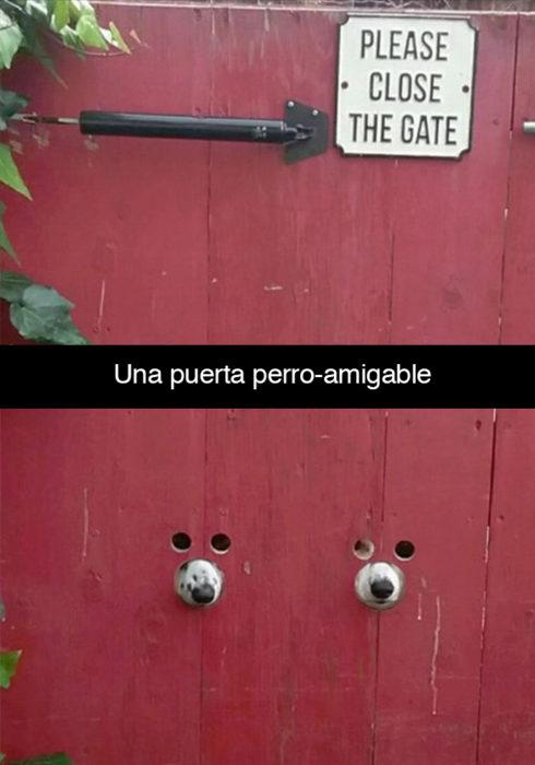 Snapchat perros - puerta perro amigable