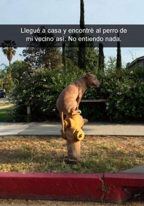 Snapchat perros - perro raro vecinos