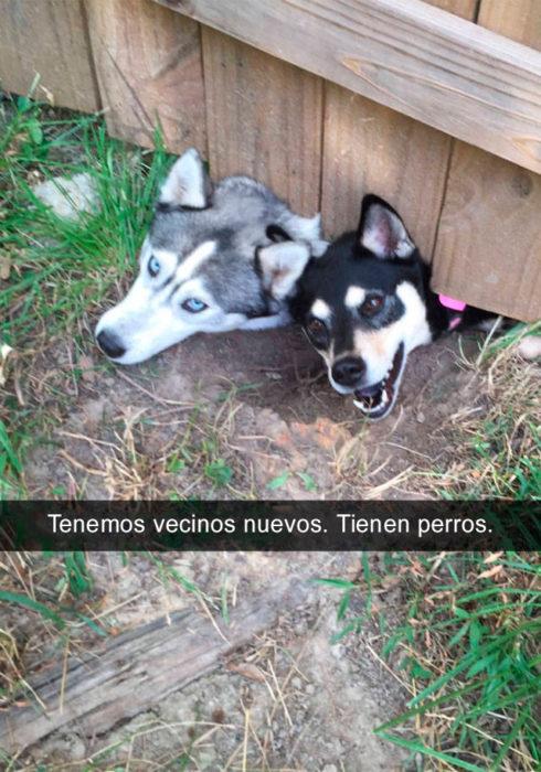 Snapchat perros - perros vecinos