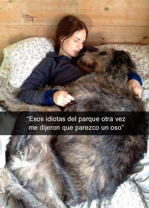 Snapchat perros - perro oso