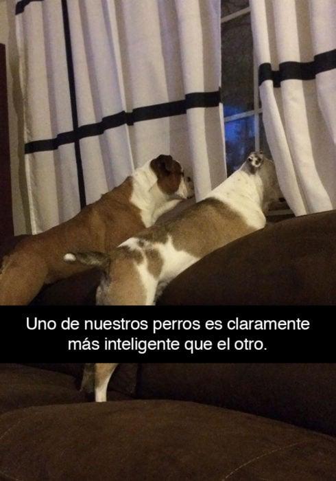 Snapchat perros - perros inteligentes