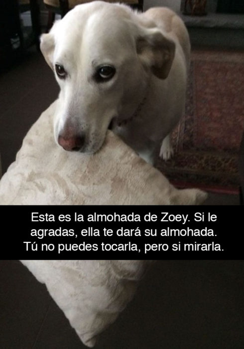 Snapchat perros - te muestra su almohada